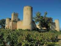 chateau-de-budos-vigne