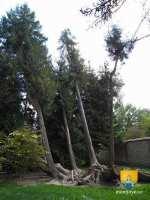 arboretum-arbres
