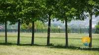 terrasse-le-notre-perspectives-allee-arbres-45